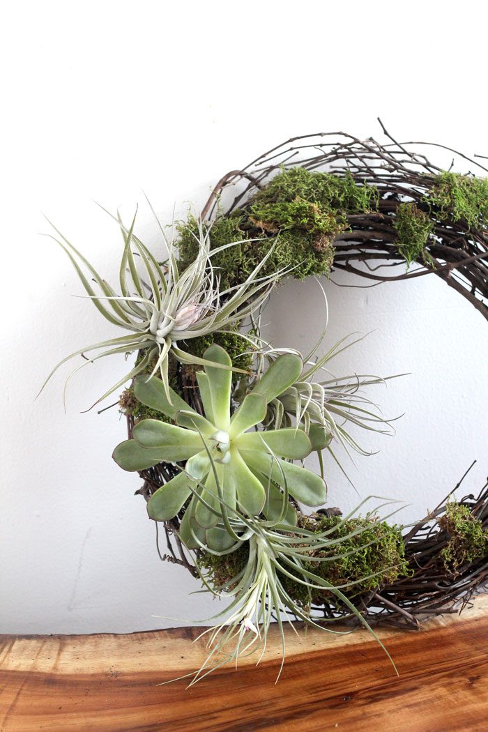 airplant_wreath_holiday
